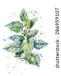 vector watercolor illustration... | Shutterstock .eps vector #286959107