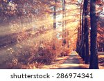 the path in the autumn forest | Shutterstock . vector #286974341