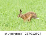 Stock photo easter hare running over a green meadow 287012927
