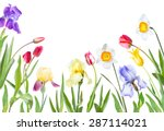 Flowers Tulips  Irises ...