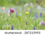 Chess Flower  Fritillaria...