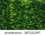 Green Wall Nature Plants...