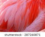 Feather Of A Flamingo Bird