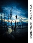 Dead Forest And Muddy Beach At...