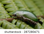 macro image of a green scarab... | Shutterstock . vector #287280671