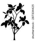 tree  flower ficus elastica   ... | Shutterstock .eps vector #287334425