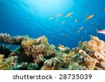 ocean  coral and fish | Shutterstock . vector #28735039