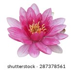 Water Lily In White Background...
