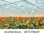 Red Roses Growing Inside A...