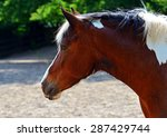 portrait of a horse pasture in... | Shutterstock . vector #287429744
