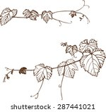 set of grape vines. vector...