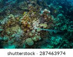 pipefish on background coral...   Shutterstock . vector #287463974