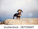miniature black and tan... | Shutterstock . vector #287528687