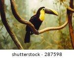 toucan | Shutterstock . vector #287598