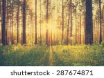 sunset in the woods  retro film ... | Shutterstock . vector #287674871