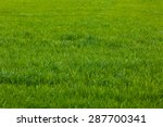 Background of a green grass. ...