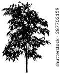 tree  flower benjamin   ficus... | Shutterstock .eps vector #287702159