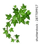 vector green ivy branch... | Shutterstock .eps vector #287709917