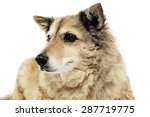 old mixed breed dog in  white... | Shutterstock . vector #287719775