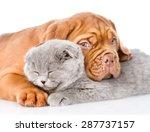 Sad Bordeaux Puppy Hugs...