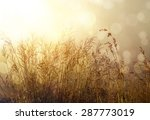 vintage effect. morning in the... | Shutterstock . vector #287773019