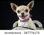 funny face chihuahua portrait... | Shutterstock . vector #287776175