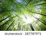 Green Trees Background In Forest