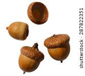 vector acorns on the white... | Shutterstock .eps vector #287822351