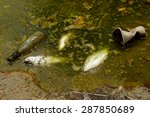 fish die due to water pollution ... | Shutterstock . vector #287850689