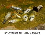fish die due to water pollution ... | Shutterstock . vector #287850695