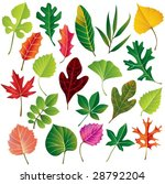 vector leaf collection | Shutterstock .eps vector #28792204
