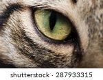 Image Cat Eye Closeup
