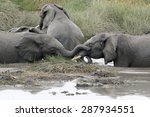 Young Elephants Playing In A...