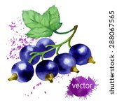 black currant watercolor | Shutterstock .eps vector #288067565