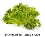 oak leaf lettuce isolated on... | Shutterstock . vector #288157205