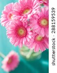 Beautiful Pink Gerbera Flowers...