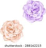 beautiful light orange and... | Shutterstock .eps vector #288162215