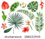 Large hand drawn watercolor tropical plants set