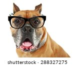 dog with eyeglasses isolated on ... | Shutterstock . vector #288327275