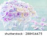 Beautiful Hydrangea Flowers In...