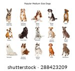 Stock photo a group of fifteen different medium size family breed dogs 288423209