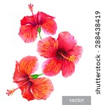 tropical plants isolated on... | Shutterstock .eps vector #288438419