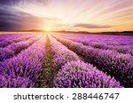 Sunrise Over Lavender Field In...