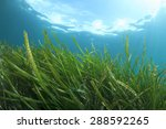 Underwater Background With...