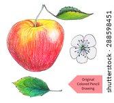 Original Apple Drawn By Color...