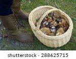 Mushroom Basket In Pineta...