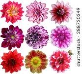 set of different dahlias... | Shutterstock . vector #288730349