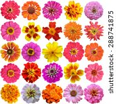 big set of the french marigolds ... | Shutterstock . vector #288741875