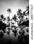 Coconut Tree At The Beach With...