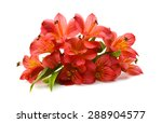bouquet of alstroemeria flowers ... | Shutterstock . vector #288904577